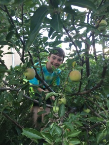 Picking apples. Such a cutie!